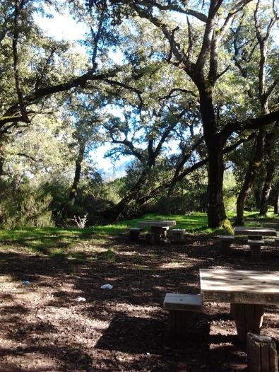 Piquenique no Parque Ambiental do Alambre